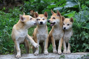 Puppies in China
